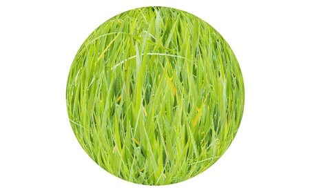 texture image is grass green color Stock Photo - 20282881