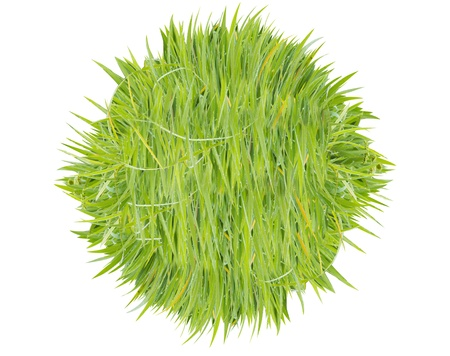 texture image is grass green color  Stock Photo - 20282904