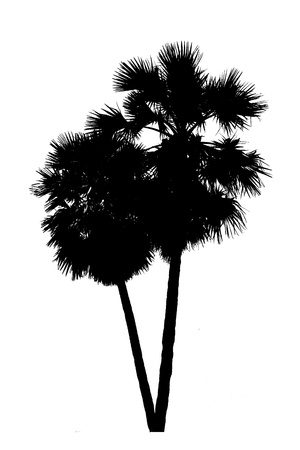 silhouette image of palm and white background