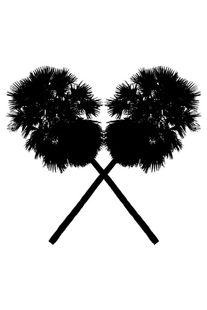silhouette image of palm and white background photo