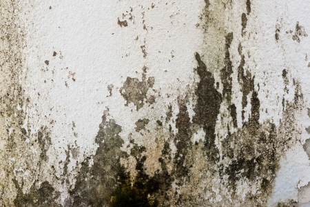 mold: the image of the Stain on the wall