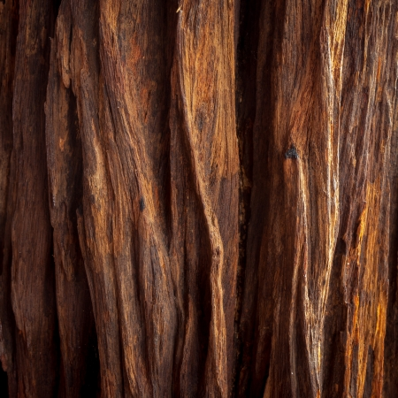 bark: the image of the wood texture