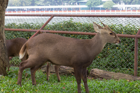 the young deer with green grass in nature of the zoo