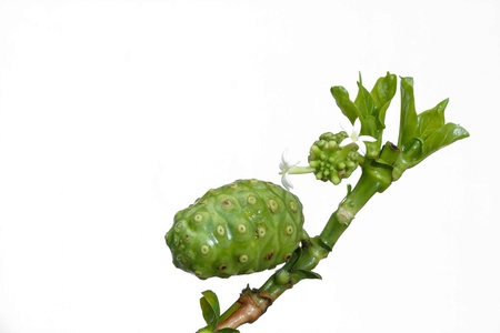 great morinda: noni