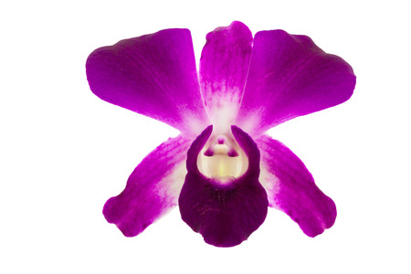 cid: Orchidaceae or orchid is flower of buddha