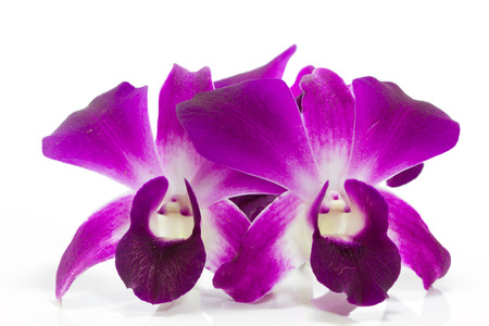 Orchidaceae or orchid is flower of buddha photo