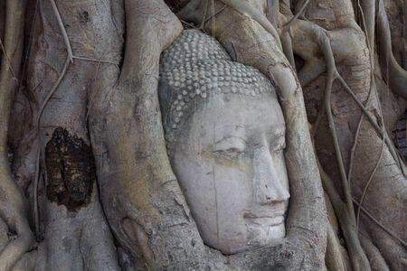 Buddhas head in bodhi tree antiques photo