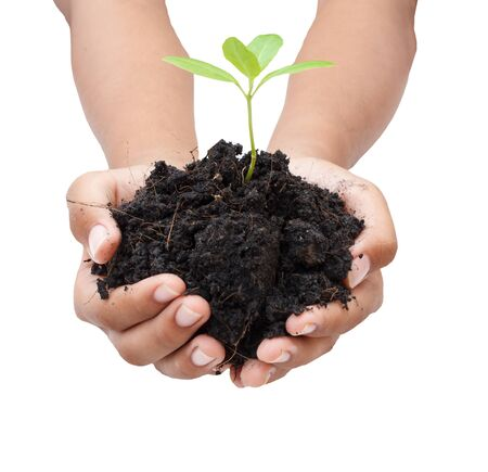 two hands hold and caring a young green plant  planting tree  growing a tree  love nature  save the world Stock Photo
