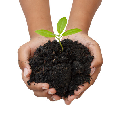 tree growing: two hands hold and caring a young green plant  planting tree  growing a tree  love nature  save the world Stock Photo