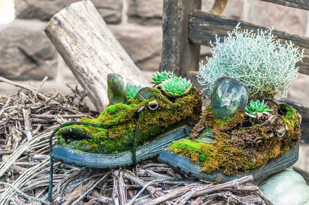 tearing down: Old boots covered in green moss made under flowerpots