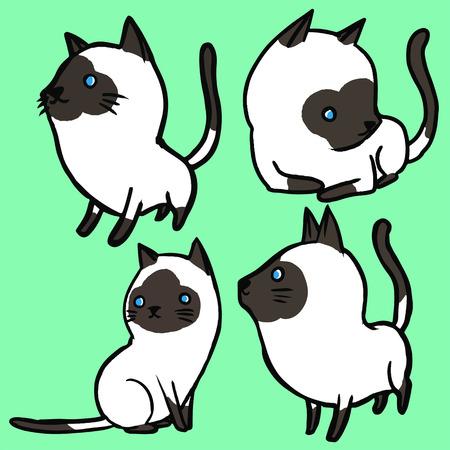 siamese: Siamese Cat