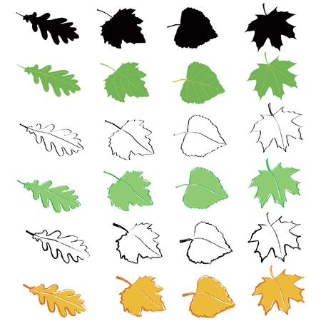poplar: Leaves (oak, poplar, birch, maple) Illustration