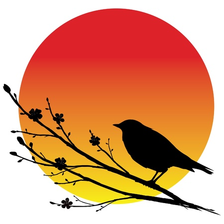 usignolo: Nightingale su un ramo di sakura