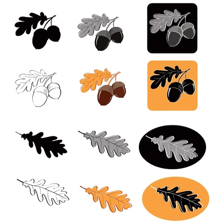 Oak leaf and acorns Vector