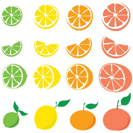 Citrus fruit: lime, lemon, orange, grapefruit