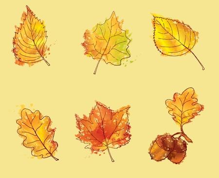 Autumn leaves in hand drawn pastel or chalk style: oak, birch, poplar, maple, elm