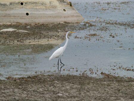 sunken boat: A bird looks for food near a sunken boat at low tide Stock Photo