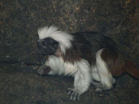 A monkey pose