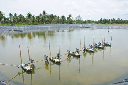 The aeration turbines in the shrimp farm for fresh water photo