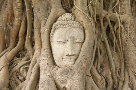 serenity: Head of sandstone buddha in the bodhi tree roots at Mahathat temple, Ayutthaya, Thailand Stock Photo