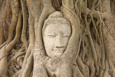 cabeza de buda: Jefe de la piedra arenisca de Buda en las ra�ces del �rbol Bodhi en templo Mahathat, Ayutthaya, Tailandia