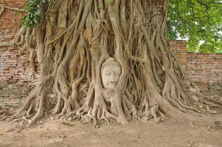 Head of sandstone buddha in the bodhi tree roots at Mahathat temple, Ayutthaya, Thailand photo