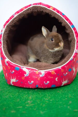 Easter bunny rabbit chocolate colour in pink house with green grass Stock Photo