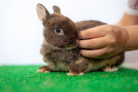 Easter young bunny rabbit chocolate colour in green grass Stock Photo