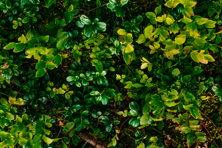 Green leaves in sunlight. Textured background of a tree. Stock Photo
