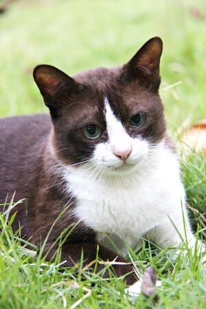 moggy: Cat in the grass Stock Photo