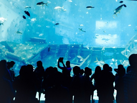 aquarium tank: People are watching Aquarium tank.