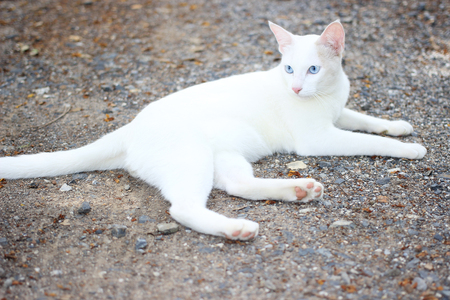 moggy: White cat is on the ground
