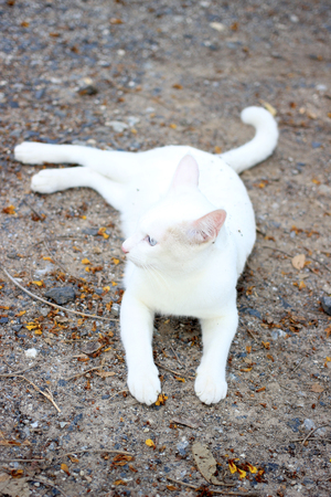 moggy: white cat on the ground