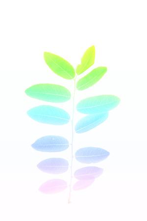 hojas de colores: hojas de colores de fondo hecho con filtro de color Foto de archivo