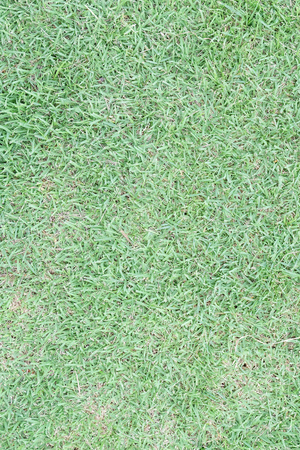 Close-up of fresh spring green grass