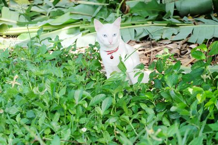 white cat is sitting on the garden