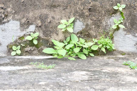 Small trees and old walls, still life