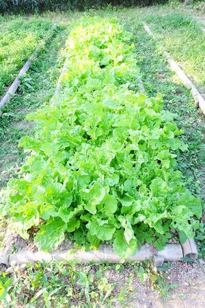 Organic vegetable farm.