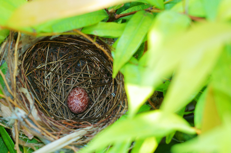 birdnest: Bird Nest With one Egg Stock Photo