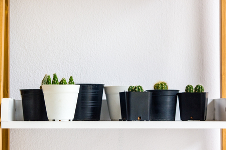 Many cactus on wood table on white wall background. Copy space.