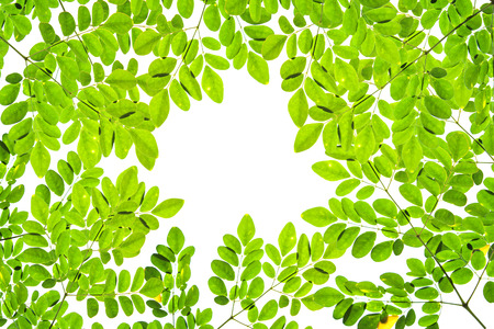 Green leave pattern texture on white background. Copy space. Stock Photo