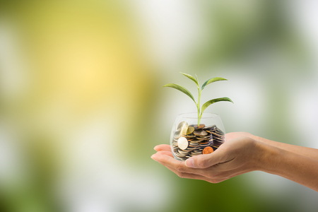 Saving, Investment concept. Hand holding Coin in a glass jar with growing tree with green nature as background. Conceptual save money for the future. Stock Photo