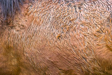 Brown horse fur pattern texture background. Abstract animal skin textured.