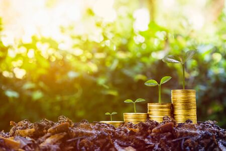 Long-term investment or making money with the right concepts. A plant growth on stack of coins on good soil with sunlight and green nature as background. Depicts a standing and stable investment. Stok Fotoğraf