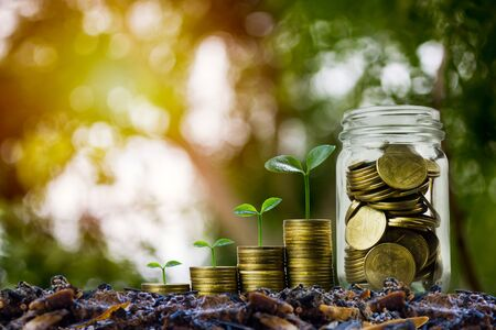 Money savings, investment, making money for future, financial wealth management concept. A coins in glass jar and step of growing tree plant on pile coins. Depicts a fund growth and wealth.