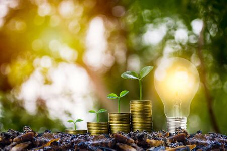 Savings and investment concept. Plant growing on stack of coins with Light bulb. Depicts idea for growing business and finance.