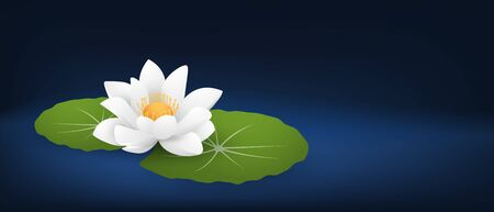 White lotus flower or water lily with leafs on dark blue background and space.