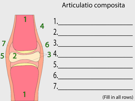 articular: Complex joint vector. Medical poster illustration. Mobile connection of bones. Somatic system connection of bones. Education anatomical atlas Illustration
