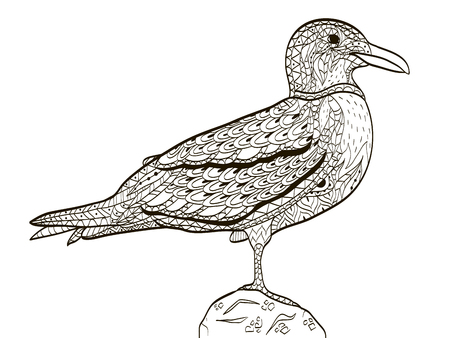 mew: Bird seagull coloring book for adults vector.
