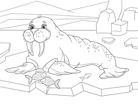 The walrus flippered marine mammal with a discontinuous distribution about the North Pole in the Arctic. Coloring book